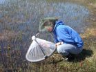 Arctic mosquitoes thriving under climate change, Dartmouth study finds 3