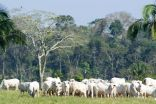 Brazilian beef industry moves to reduce its destruction of rain forests