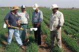 Farmer networks hold key to agricultural innovation in developing countries, Stanford study finds