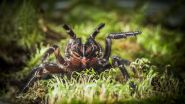Large funnel-web spider find surprises scientists