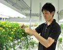 Long-distance communication from leaves to roots