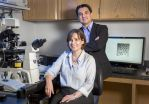 Researchers identify unique marker on moms chromosomes in early embryo