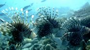 Saving coral reefs depends more on protecting fish than safeguarding locations 2